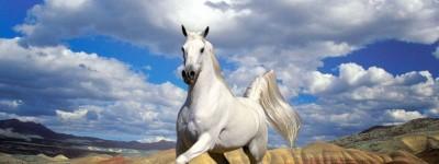 Купить лошадь в кредит – мечта, сказка или уже реальность в России?