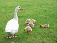 Сельский кредит на ЛПХ — понятие и меры господдержки