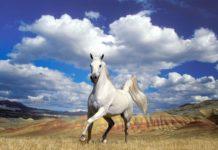 Купить лошадь в кредит